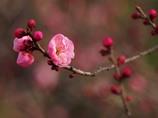 春を呼ぶ。。