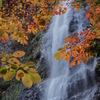 秋景額「滝」