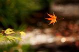秋の葉。。