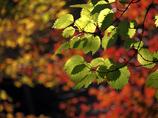 秋のひかり