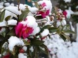 大阪にも雪の朝
