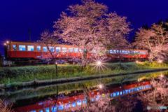 房総の夜桜