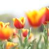 春色エアブラシ