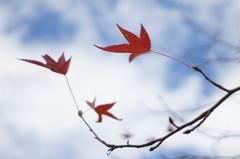 君と見た秋の空に、短いサヨナラをしたら‥‥