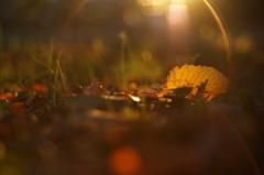 落ち葉のランプ
