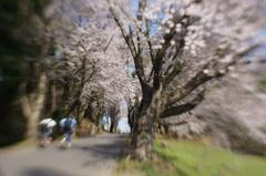 僕たちの春を、おもいっきり駆け上がるんだ!!
