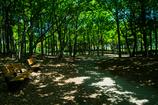 新緑 ベンチの有る風景
