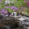 お茶屋の庭