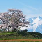 NIKON NIKON D750で撮影した(今回の最北点の桜)の写真(画像)