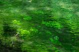 緑に染まる