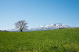 晴れ渡る春の訪れ