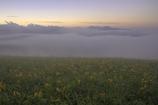 雲上の花園