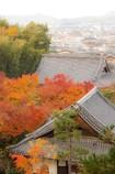 裏山から圓光寺と京都の街並み