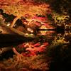 紅葉と映り込み