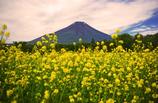 初夏の富士(キカラシ)