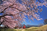 春香る風車の牧場
