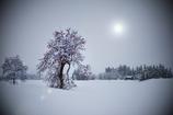 豪雪に耐える柿木