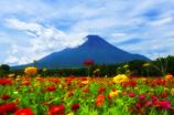 富士と百日草Ⅱ