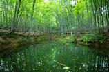 静寂の美人林