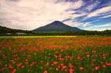 初夏の富士(ハナビシソウ)