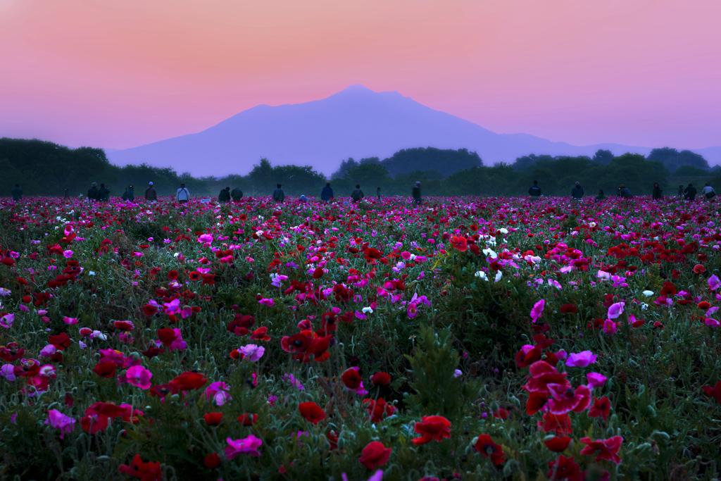 夜明けの筑波山