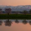 桜並木の夕焼けⅡ