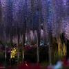 妖しき大樹