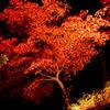 紅葉、烈火のごとく