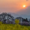 春薫る夕富士