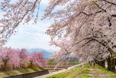 咲き誇る散歩道