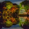 映し出される秋の夜