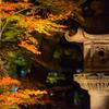 秋夜の風情
