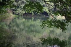 池辺 三宝寺池 9月