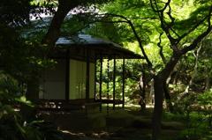 新緑色の庵