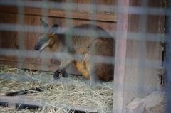 ワラビー 野毛山動物園 10月