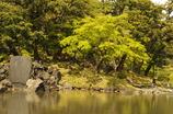 小石川後楽園 池