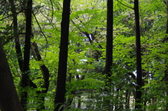 林の風景 三宝寺池 9月