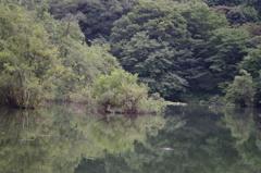 風景 2 三宝寺池 9月