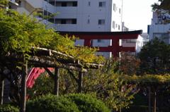 藤棚と鳥居