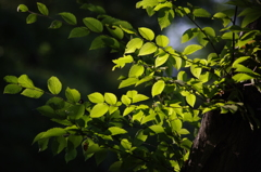 緑 安田庭園 9月