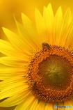 Summer Bee vol.2