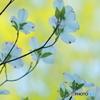 咲けよ花たち