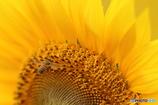 Summer Bee vol.3