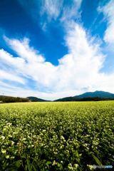 蕎麦の花と筑波山1