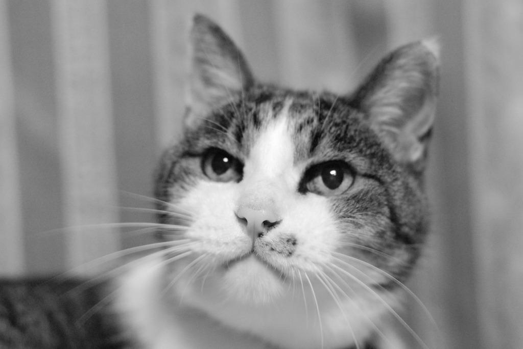 レトロ調な猫