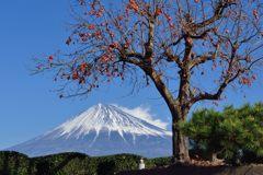 平日の富士山487