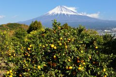 平日の富士山488