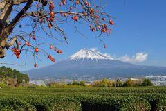 平日の富士山486