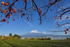 平日の富士山485