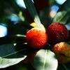 誘惑の果実